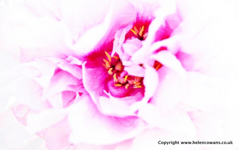 Close Flower